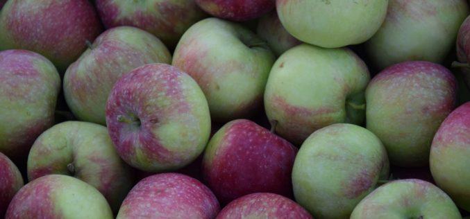 Tegoroczne zbiory jabłek będą o 30-35% niższe niż w 2016 r.?