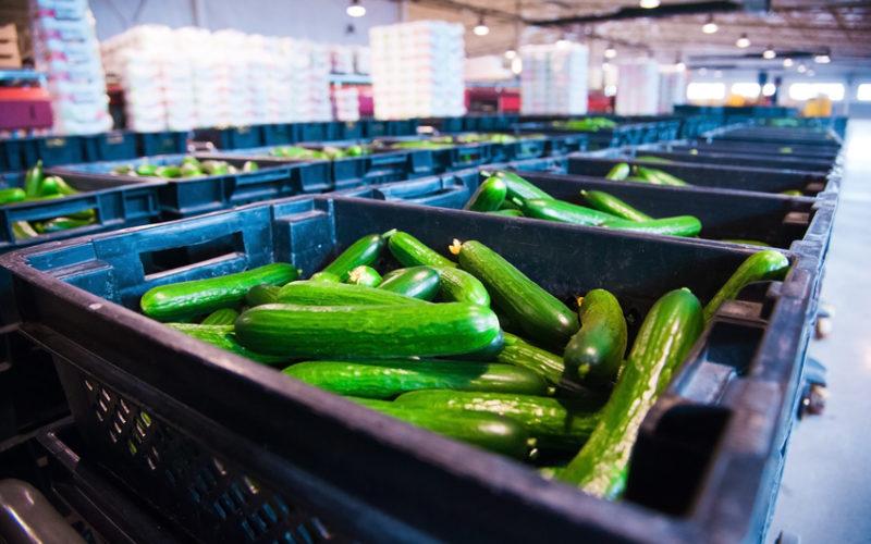 Rosną dostawy warzyw do zakładów przetwórczych