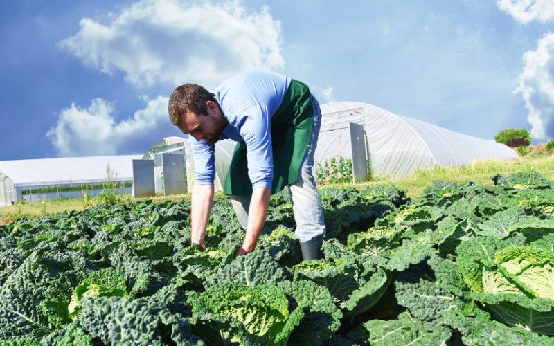 Wstępne prognozy zbiorów warzyw gruntowych w Polsce