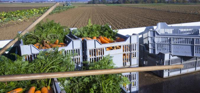 Podaż ustabilizowała rynek warzyw