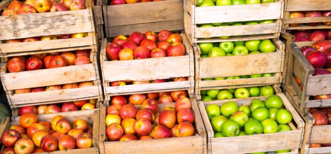 Na rynku jabłek deserowych panuje stagnacja?