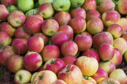 Jak kształtują się ceny gruszek i jabłek przemysłowych?