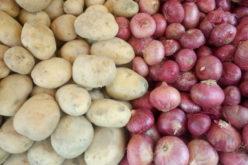 Systematycznie drożeje obrana cebula. A co z resztą warzyw?