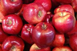 Ceny jabłek nadal rosną. Jak długo?