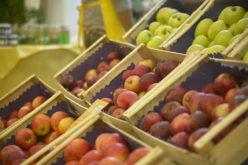 Małe zapasy jabłek w Polsce i Europie windują ceny