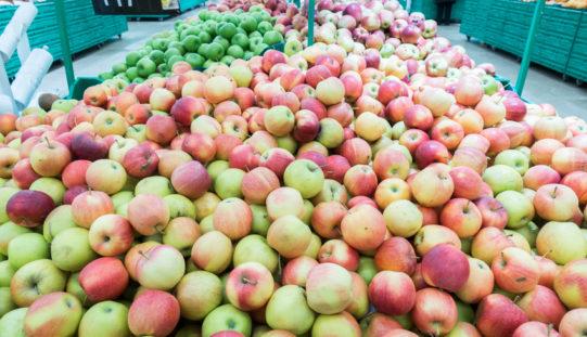 Dalsze spowolnienie na rynku jabłek