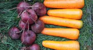 Niskie ceny ziemniaków i buraków – aktualne ceny z rynku warzyw
