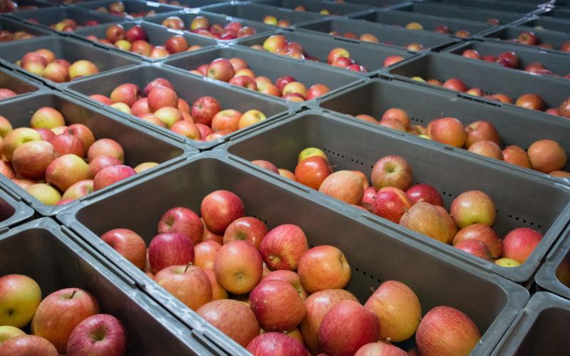 Małe dostawy owoców windują ich ceny