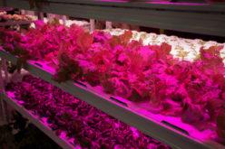 Lampy LED w szklarni – czy to się opłaca?