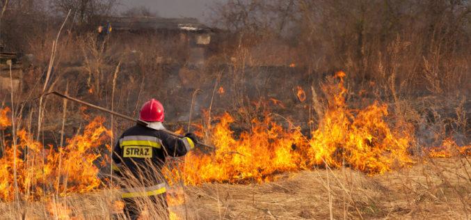 Kary dla rolników za wypalanie traw