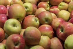 Majówka na rynku jabłek przyniosła obniżki cen