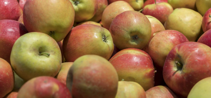 Przechowalnie części sadowników nadal wypełnione jabłkami?