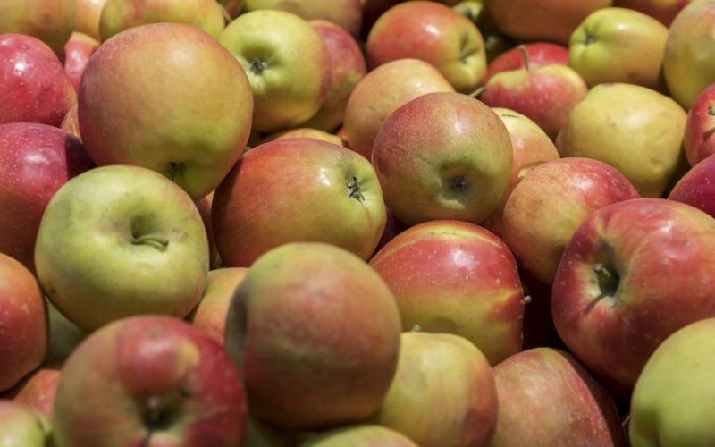 Wzrost cen jabłek przemysłowych. Stabilizacja na niskim poziomie stawek za jabłka kierowane na rynek deserowy