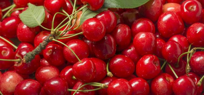 Niepotrzebny zamęt i zdenerwowanie na rynku wiśni?