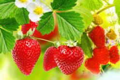 Jakie ceny na rynku owoców miękkich?