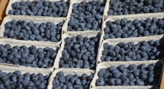 Rosnąca podaż borówki amerykańskiej obniża ceny owoców