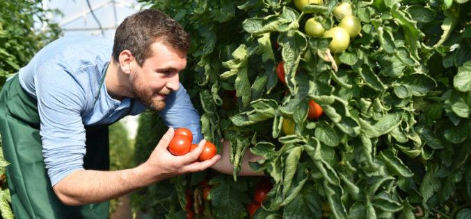 Jakie są wynagrodzenia pracowników najemnych w ogrodnictwie?