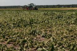 Program pomocy dla rolników poszkodowanych przez suszę