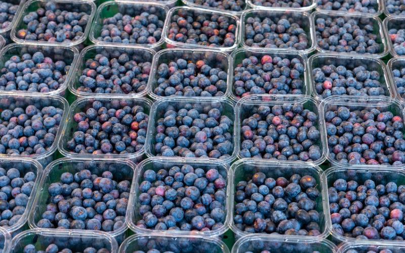Ostatnie dni ciepłej pogody wpłynęły na wzrost podaży owoców borówki amerykańskiej