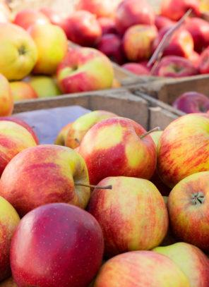 Rosną emocje na rynku jabłek deserowych i do przetwórstwa